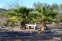 CRG palm trees with bench
