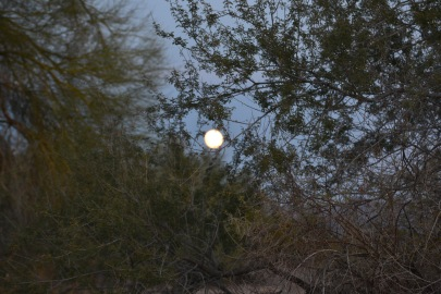 Dec super moon with trees