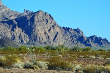 The Seal Kofa ...