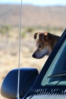 Charlie on Patrol