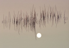 Manchurian Moon (5)