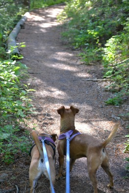 DSC_0030 (1)Chweenies on Wetmore CG Trail