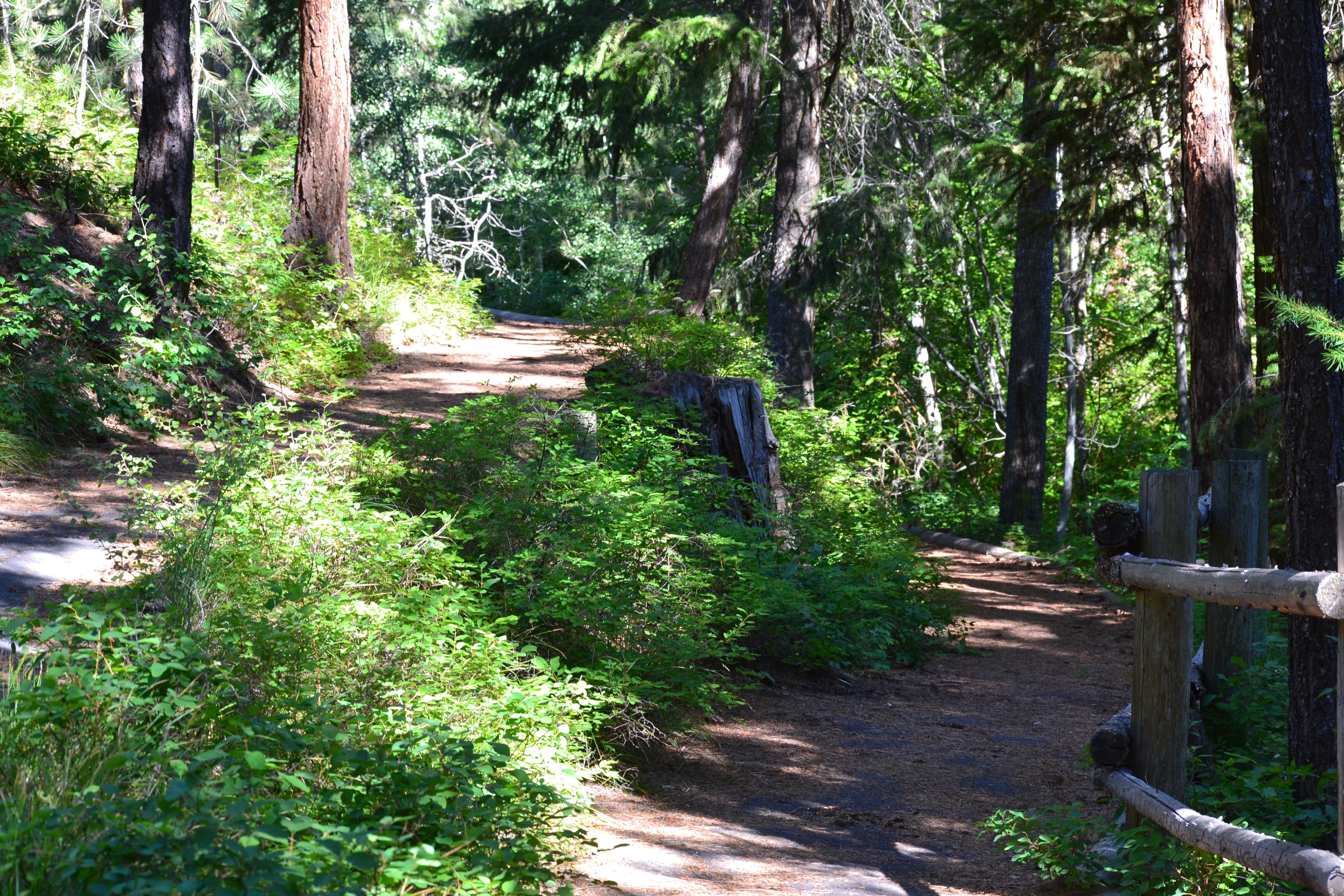 DSC_0031 (1)Wetmore trail to Yellow Pine CG