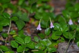Tinier Flowers