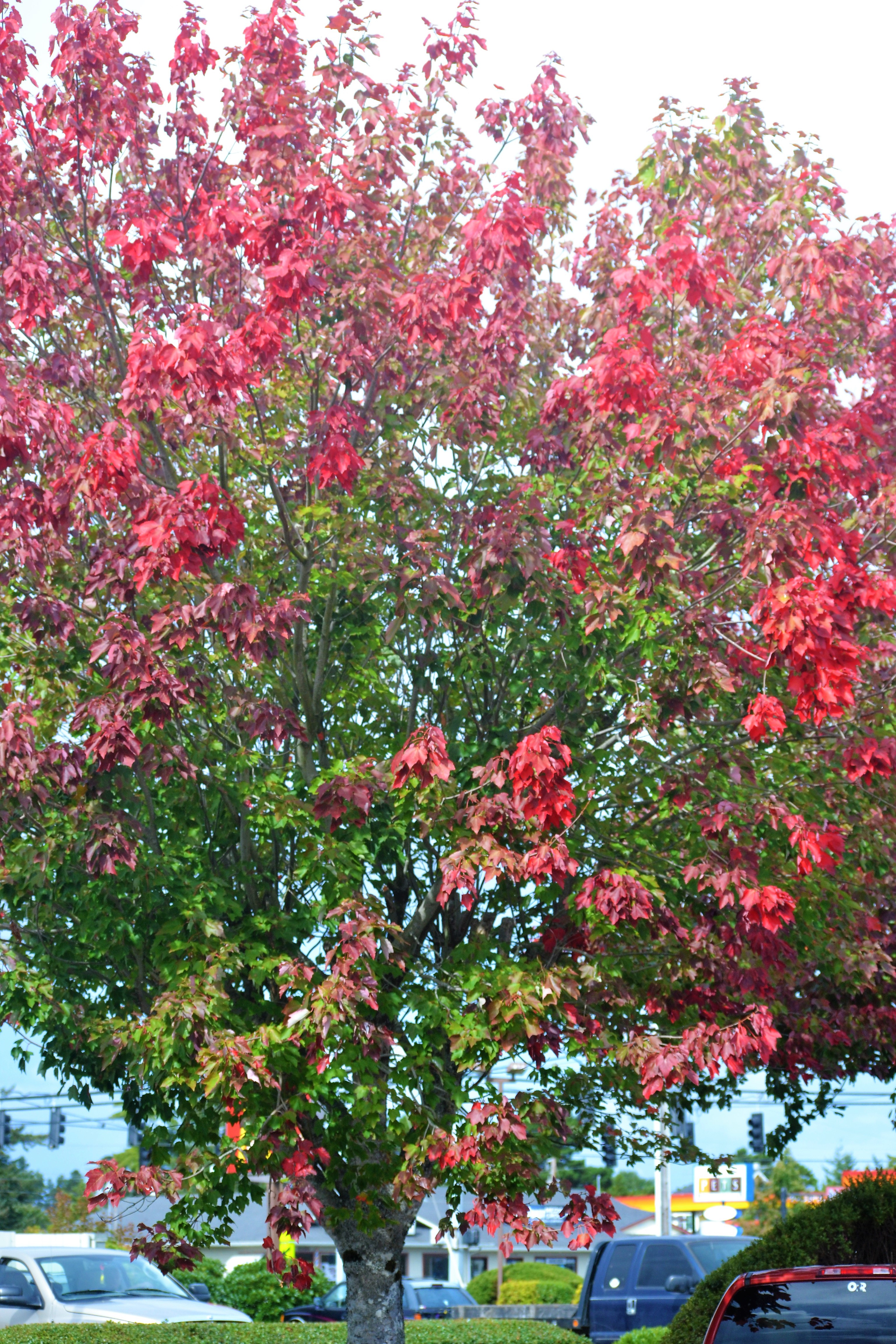DSC_0002Turning Leaves, Florence Oregon