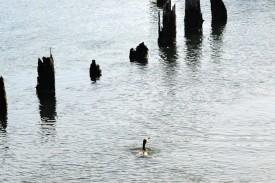 DSC_0011Cormorant feeding in marina