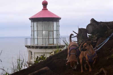 DSC_0025 (3)Chiweenie Brothers at Haceta Lighthouse