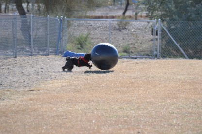dsc_0124dog with exercise ball, q dog park
