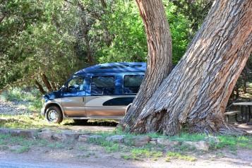 DSC_0001 (1)MissAdventure and the Giant Cottonwood Tree