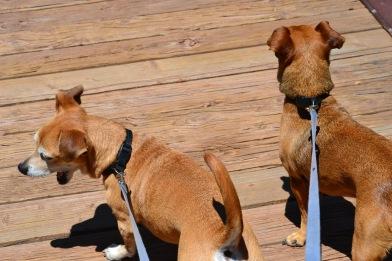 DSC_0021Wild Weiner Dogs of the Footbridge