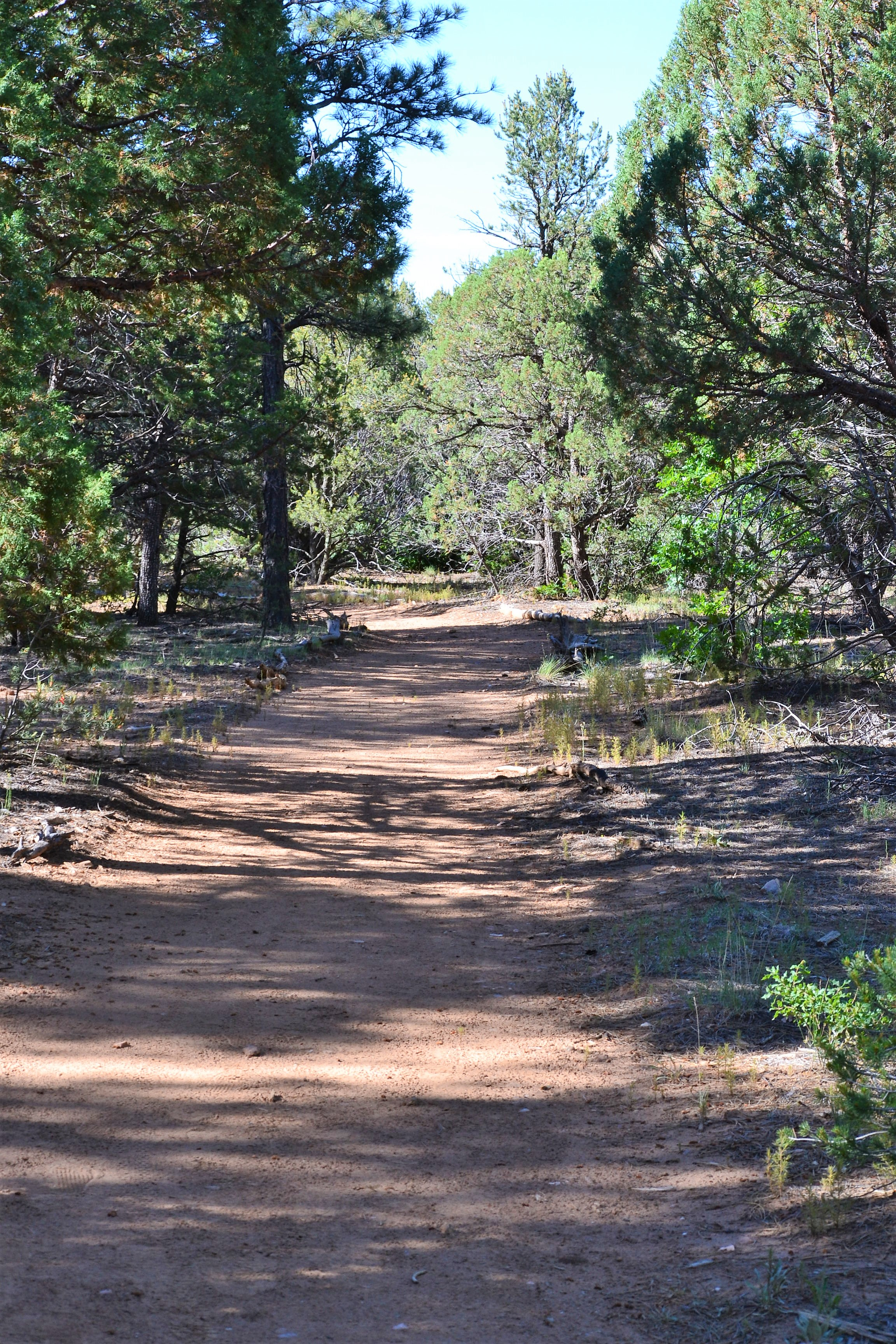 DSC_0057Outer Trail at Manzano Mtn SP