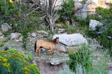 DSC_0071Stallion on the bluff, love this shot