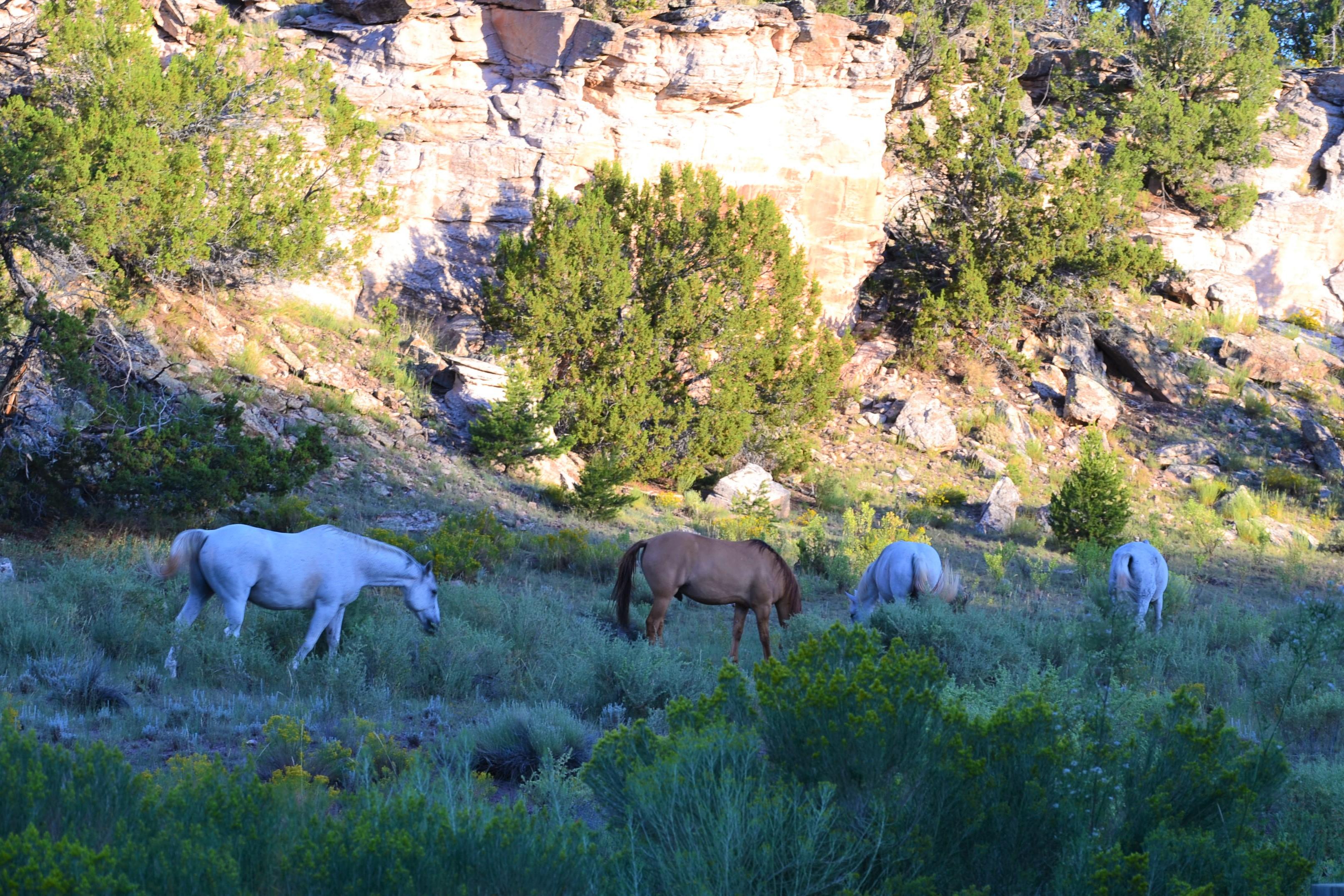 DSC_0076 (1)Wild Horses
