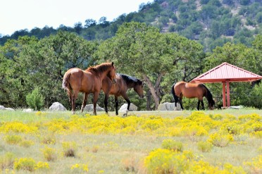 DSC_0091Wild Horses at Bluewater