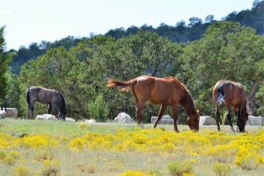 DSC_0092Wild Horse. With Colt. Bluewater