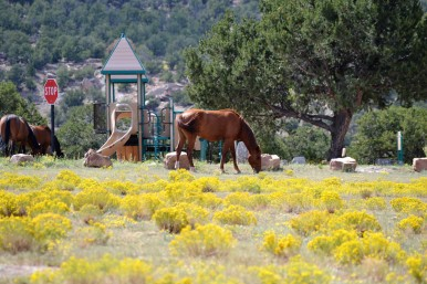 DSC_0096Wild Horses at Bluewater